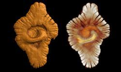 14-4-faunegabon-2ga-fossile3d-03.jpg