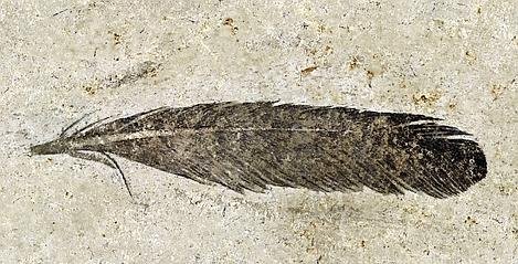 Archaeopteryx 469x239