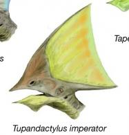 Tapejara heads bw nobu tamura cc by 3 0 2