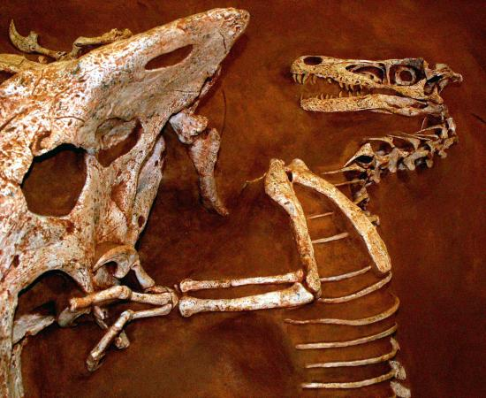 Velociraptor and protoceratops fighting dinosaurs