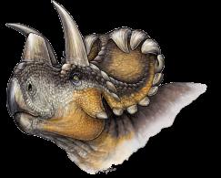 Wendiceratops restoration danielle dufault plosone cc by 4 0